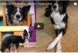 Hundetricks einfach und schnell lernen