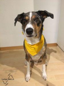 Gelber Hund - Hund mit gelber Schleife