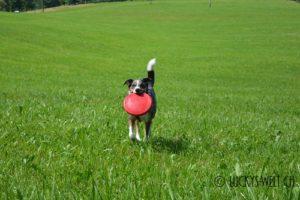 Hundefrisbee Flyer, die perfekte Frisbee-Scheibe für Hunde