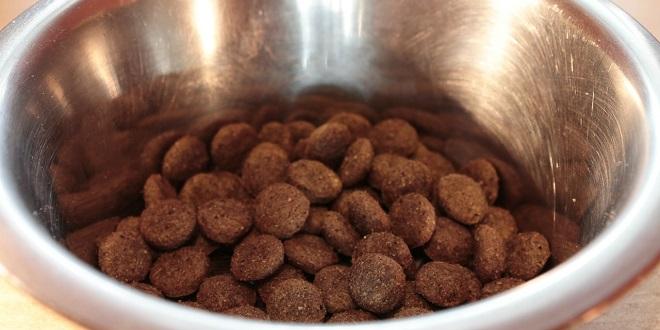 Wie wichtig sind Mineralstoffe für den Organismus des Hundes?